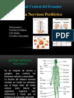 Diapositivas Sistema Nervioso Periférico