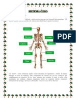 Grupo 11 Sistema Oseo y Articular