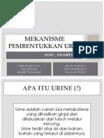 Mekanisme pembentukan urine