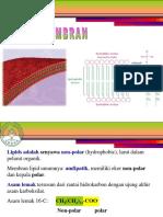 1_lipid-dan-membran.ppt