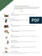 Todas Las Razas de Perros - Con Fotos, Cuidados y Características