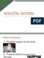 skeletal system2