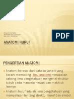 ANATOMI HURUF