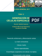 Teórico 12 - Generación de Células Especializadas (2017)