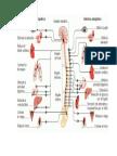 Cadenas Musculares 1
