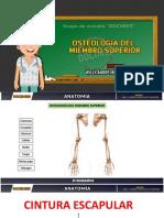osteología del miembro superior