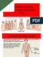 piel  2018.pdf