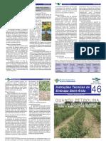 guandupetrolina.pdf