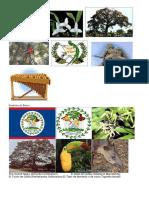 181078448 Simbolos Patrios de Centroamerica y Belice