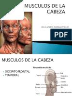 Musculos de La Cabeza2