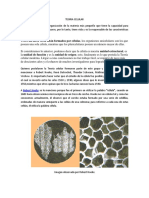 102985233-Teoria-Celular.pdf