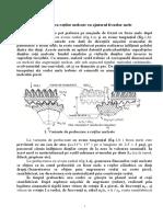 Danturarea.pdf