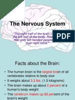 Nervous System Lec.ppt