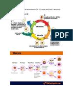Infografía de La Reproducción Celular