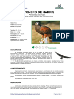 Ficha RATONERO de HARRIS _Parabuteo Unicinctus