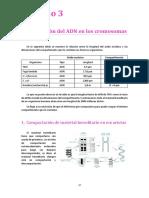 TEMA 3. Organización Del ADN en Los Cromosomas