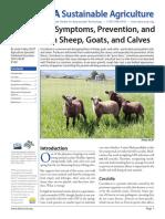 Coccidiosis Sheep Goats Calves (1)