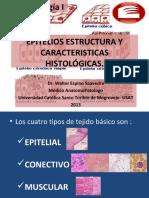 epiteliosestructuraycaracteristicashistolgicasi-13(1)