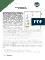Instructivo Practica 1 Bacterias y Protistas b2b Efpem Sabado 2015