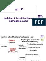 Pathogenic Cocci