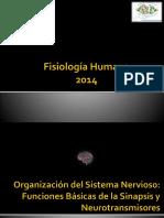 4-Organizacion Del Sistema Nervioso