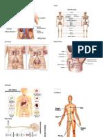 tipos de Sistemas del Cuerpo Humano.docx