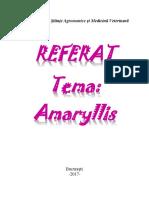 Referat Amaryllis