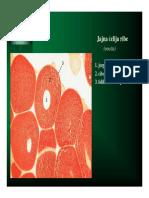 Citološke pretrage.pdf