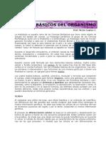 Capitulo 1 Tejidos Basicos 2016