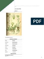 Ro.wikipedia.org Floarea Reginei
