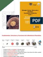 Membrana Estructura y Funcion