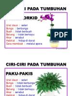 Ciri2 pada tumbuhan Tahun 3
