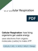 ch 8-3 cellular respiration