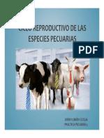 Ciclo Reproductivo Especies Pecuarias