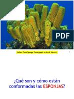 Clase Porifera