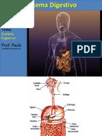 Aula Sistema Digestivo 2013