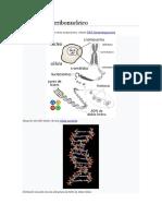 Ácido desoxirribonucleico 1