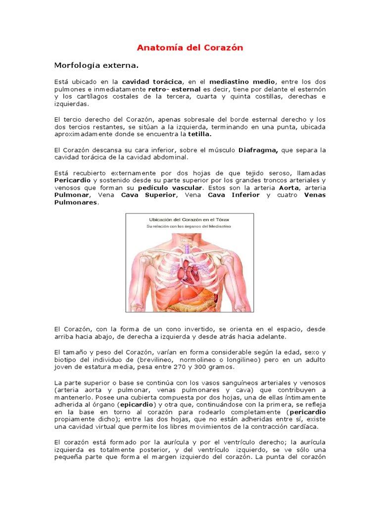 7353032-Anatomia-Del-Corazon.doc