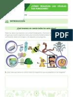 LA CELULA ACTIVIADES 5 PRIMARIA Y CUARTO +.pdf