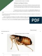 10 remedios Caseros Para Eliminar Las Pulgas En Los Perros.pdf