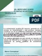 Efectos Del Mercurio Sobre Algunas Plantas Acuáticas Tropicales