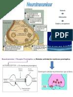 Neurotransmisores Uam Est 2017-2