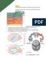 Neuro Exam 1