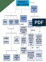 Mapa Conceptual Denis