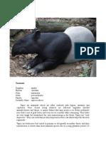 Tapir.doc