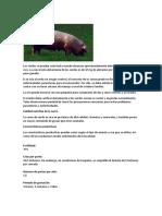 Cria de Cerdos
