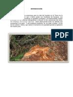 Deforestación Sabana de Torres