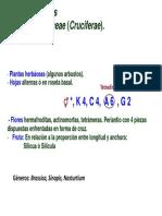 Brasicaceae.pdf