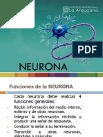 neuro ppts.pptx