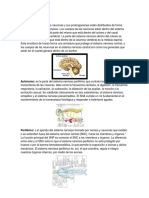 Sistema nervios1.docx